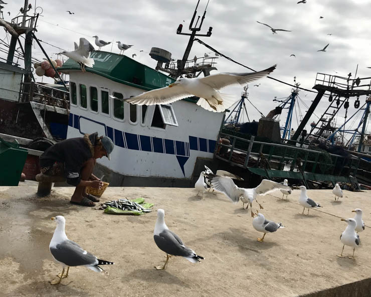 fishermen in essaouira